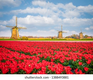 Traditional Dutch windmills with tulip flower foreground in Netherlands