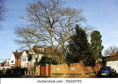 Traditional English houses with trees in East Hill, Wandsworth, South West London, England, UK