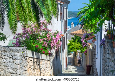 Traditional European Mediterranean architectural style in the streets and houses, yard, porches, shutters in the afternoon sunbeam, surrounded by vine, hydrangea and palm at summertime. Mali Losinj.