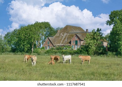 traditional Farm house called Haubarg on Eiderstedt Peninsula near Sankt Peter-Ording,North Frisia,Schleswig-Holstein,Germany