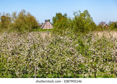 Traditional farmhouses in the region of Altes Land, Germany