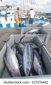 Traditional fished Tuna in Canary Islands, Spain.