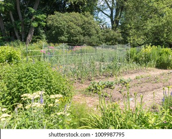 Traditional garden in summer
