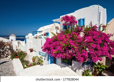 Traditional greek house with a big bougainvillea flowers in Oia town - Santorini island,Greece