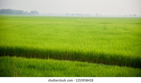 Traditional green paddy field in an urban area unique photo