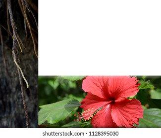 Hibiscus Flower Powder Stock Photos Images Photography Shutterstock