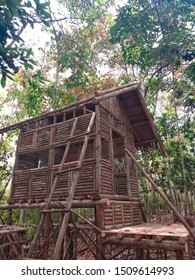 A traditional hobbit house was made by a farmer. The farmer changed his gum trees plantation into the tourism of traditional hobbit houses. This new business concept has changed the farmer's life.