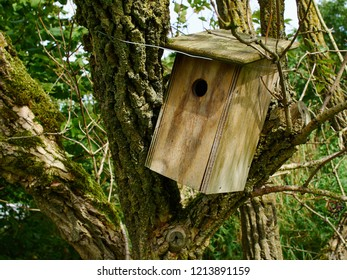Traditional homemade classic wooden nesting box hanged on a tree in the garden