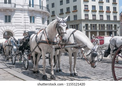 Traditional horse carriage in downtown, Vienna, Austria