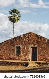 Traditional house from countryside and carnauba tree, inner town, from brazilian northeast.
