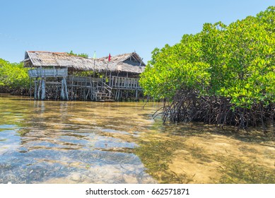 traditional house at mangroves forest at Lamanok Island of Anda at Bohol island Philippines