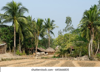 Traditional houses of clay on area Sundarbans National Park in the biggest delta of the Ganges River in India, West Bengal