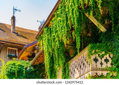 Traditional houses in Yvoire covered with ivy, France
