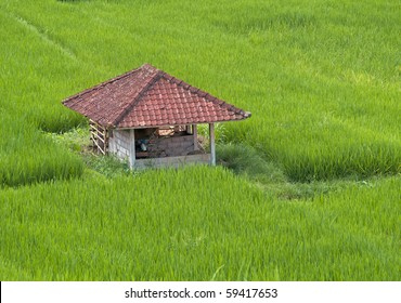 Traditional hut on rice fields