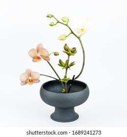 Traditional japanese ikebana in black porcelain vase on a white background