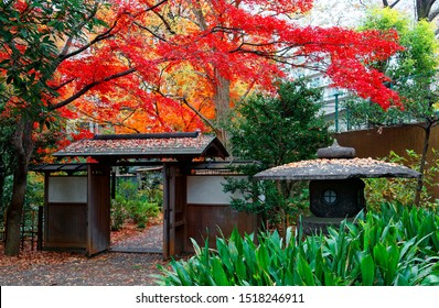 A traditional Japanese stone lantern by a roofed wooden gate under fiery maple trees in a beautiful corner of Rikugi-en Park, a historic Japanese garden famous for vibrant fall colors, in Tokyo, Japan
