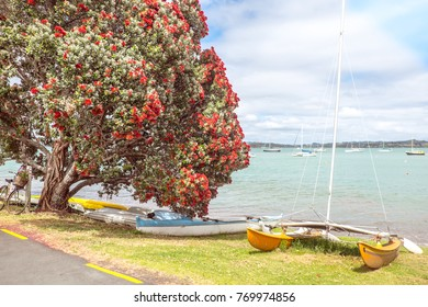 Traditional kiwi summer beach with flowering red Pohutukaka New Zealand Christmas tree, sea and boats - in Russell, Bay of Islands, Far North District, Northland, NZ