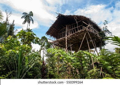 Traditional Koroway house perched in a tree above the ground. Korowai Treetop House Deep Inside the Forest. Papua, Indonesia