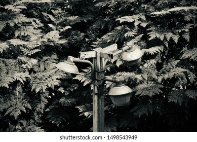 Traditional lamp posts with tree leaves background photo