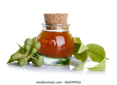 Traditional medicine: Eucalyptus essential oil bottle with leaves and  seeds isolated on white background
