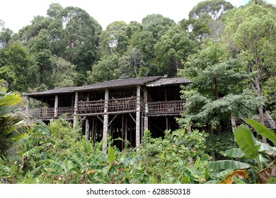 A traditional native Dayak timber house in the Borneo jungle.