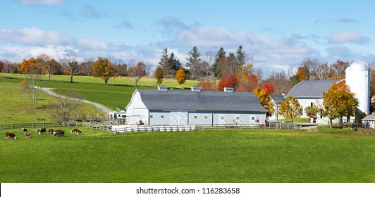 Traditional New England farm with cows