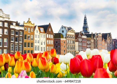 Traditional old buildings and tulip flowers in Amsterdam, Netherlands