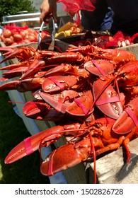 Traditional pit-style clambake, featuring bright red lobsters, freshly steamed over seaweed and a fire.
