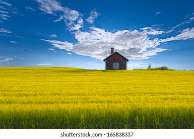 Traditional red, swedish summer-house set in a yellow oat field against a blue sky, the island of Froson, Ostersund, Sweden