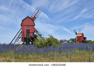 Traditional red windmills and blossom blueweed flowers at the island Oland in Sweden
