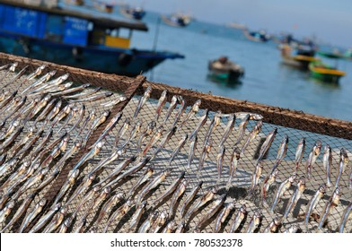 Traditional salted fish drying on racks in Cham island, Central Vietnam, near Hoi An ancient town