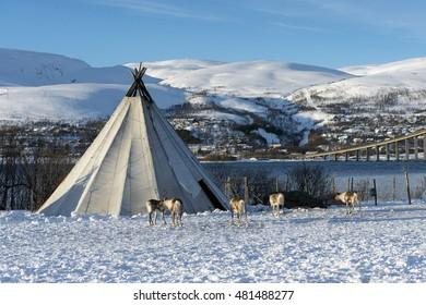Traditional Sami reindeer-skin tents (lappish yurts) in Troms region of Norway