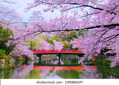 Traditional Scenery of Beautiful Japanese Elegance Style is Shiromidai Park & Himeji castle(Himejijo), Bridge, Pond, Shachihoko Statue, Main Tower(Tenshukaku) and Cherry Blossoms On Cloudy Day.