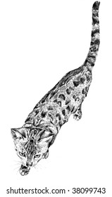 traditional sketch of a cat walking