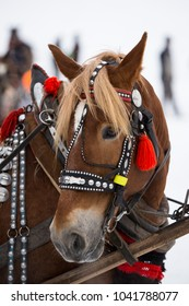 Traditional slovak horse with ribbon