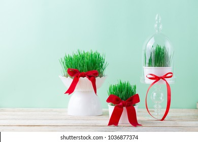 Traditional spring symbol Novruz semeni fresh green wheat grass in white plate, different sizes, Nowruz celebration Persian holiday Iran Azerbaijan, red ribbon tied bow, wooden table Easter concept