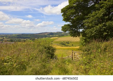 a traditional summer english landscape with woodland and patchwork fields under a blue summer sky in the yorkshire wolds