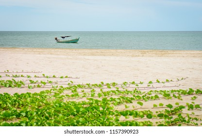 Traditional Thai fishing boat and Ipomoea pes-caprae plants at Laem Sala beach. Seascape view of the Gulf of Thailand from Prachuap Khiri Khan province.
