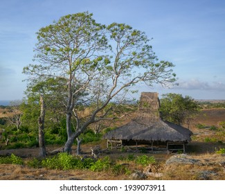 Traditional thatch roof house with tree in countryside near Prai Ijing village, East Sumba island, East Nusa Tenggara, Indonesia