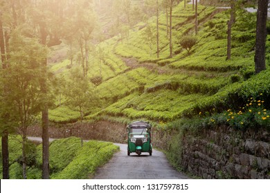 Traditional tuk tuk taxi on road among tea plantations, Landscape tea plantation