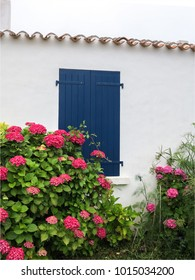 Traditional vacation house with hortensias in the island of Yeu in France