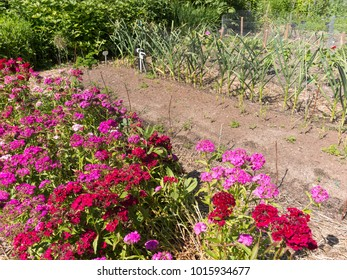 Traditional vegetable garden with flowers and greens