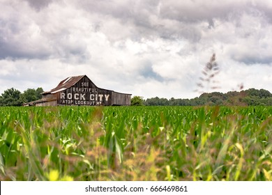 "Traditional weathered barn in southern Appalachia painted with ""See Rock City"" advertisement as viewed looking over a corn field - horizontal"
