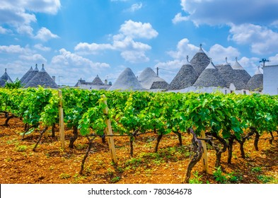 Traditional white trulli houses surrounded with vineyards in Alberobello in Puglia, Italy.