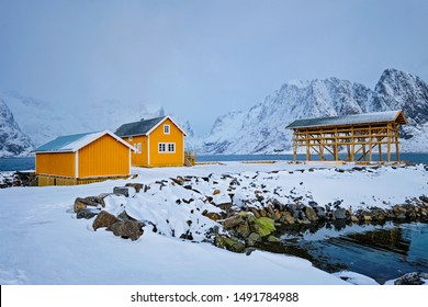 Traditional yellow rorbu house in drying flakes for stockfish cod fish in norwegian fjord in winter. Sakrisoy fishing village, Lofoten islands, Norway
