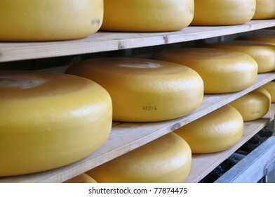 Traditionally made Dutch cheese ripening on shelves
