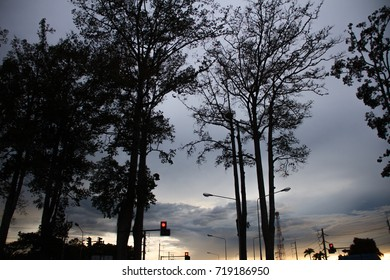 Traffic lights, street lights and street trees. Evening atmosphere.