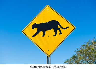 Traffic sign at the road side warns the drivers about cougar crossing next 2 miles