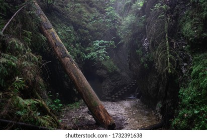 Trail after the rain with fallen tree in Sucha Bela Gorge. Slovak Paradise National Park - Slovensky Raj