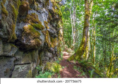 A trail alongside moss covered rocks in the Pacific Northwest